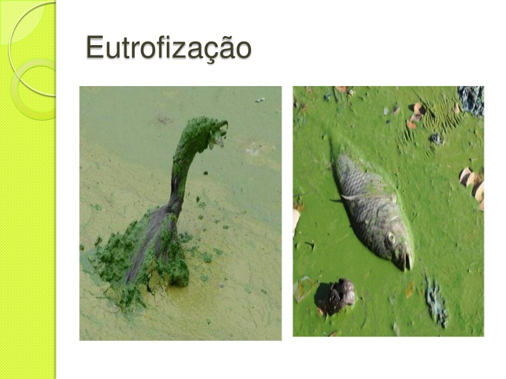 eufro02.png